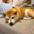 ソファでお昼寝