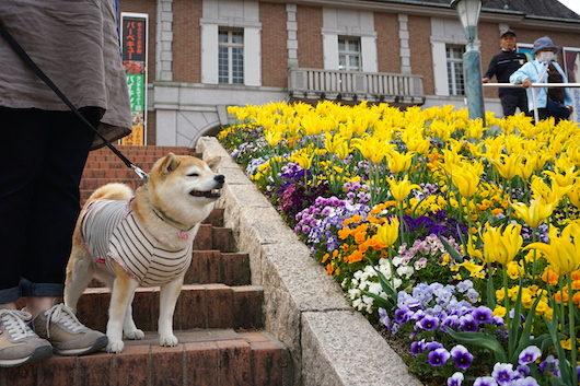 「神戸フルーツフラワーパーク 犬」の画像検索結果